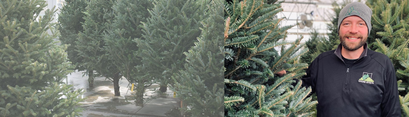 CHRISTMAS TREES | In stock now!